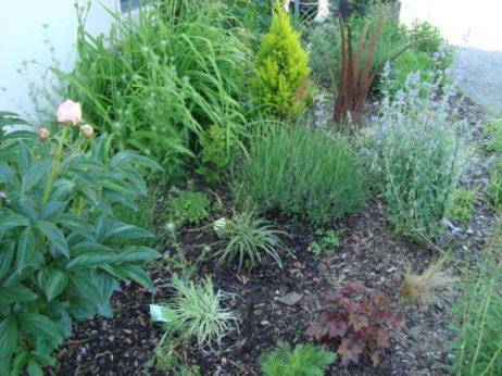 Gartengestaltung naturgarten kriesi hausservice for Gartengestaltung mit pflanzen